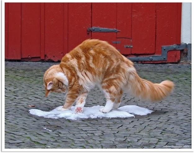 yetaland cat