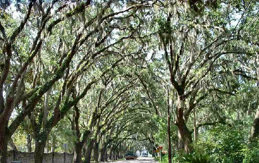 A beautiful tree canopy beautifies your entire property. Canopy trees are able to photosynthesize relatively rapidly due to abundant light. & Zimmerman Tree Service: Canopy Reduction In South Florida