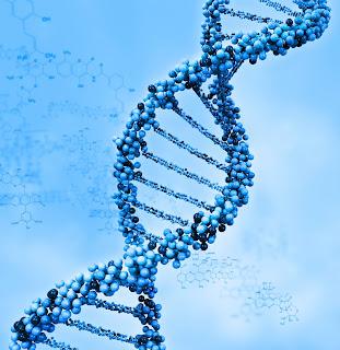 Gen Manusia Sama Dengan Gen Terumbu Karang