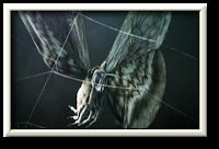 papillon-dans-toile-araignée