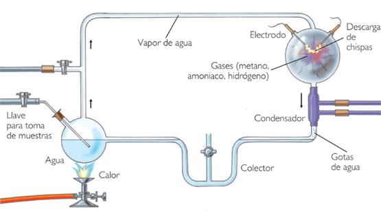 Evolucion Quimica y Biologica Biológica y Química