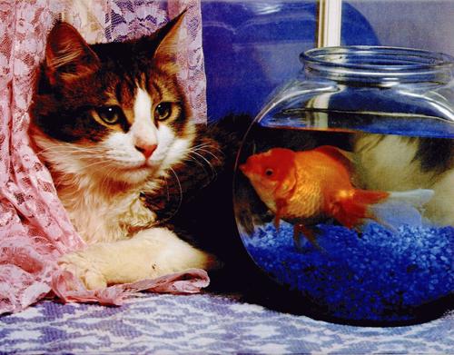 Fotos de humor con gatos