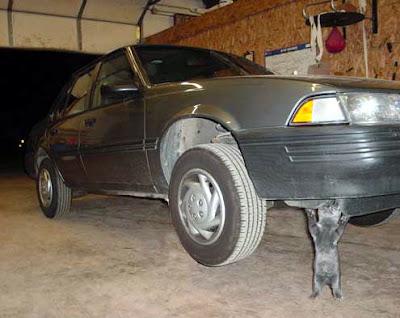 Funny Cat Lifting The Car