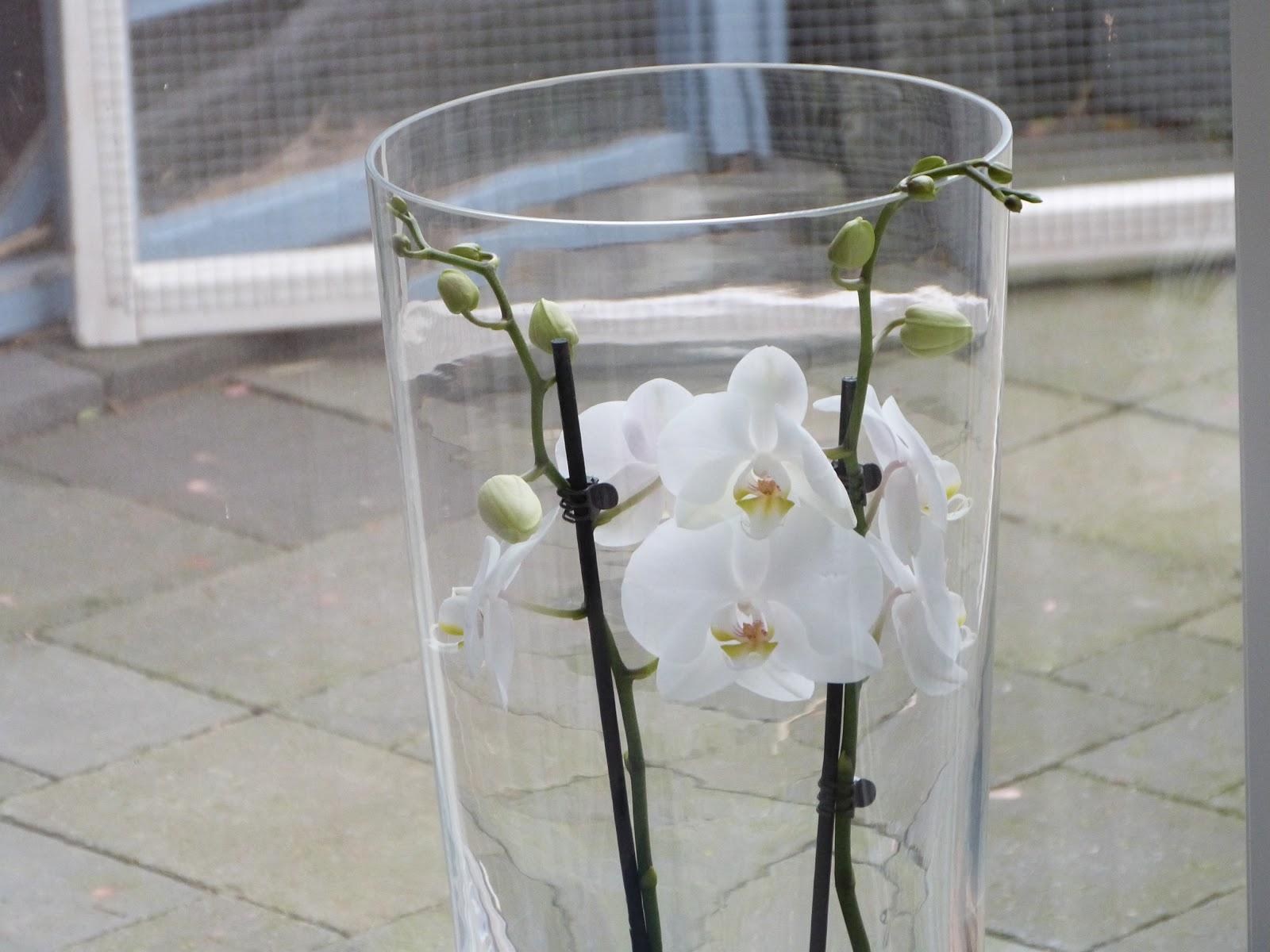 Vaak Het Brocante-Schelpenhuisje: Orchidee in hoge vaas &CH15