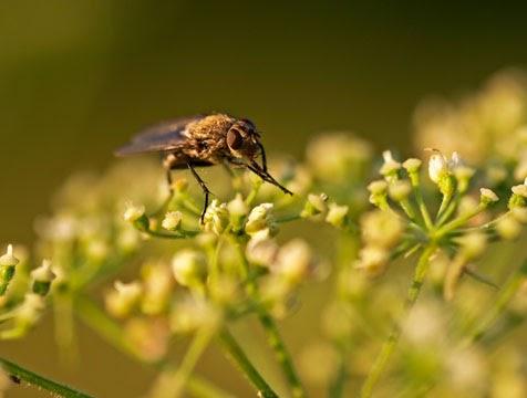 Plantas y flores plantas especies insectos for Plantas fundamentales