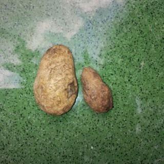 Sepasang Mustika Batu Kocak Kepompong