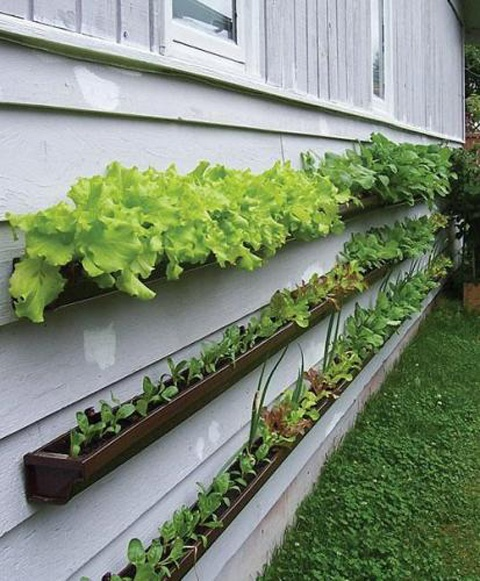 ... Been Fascinated That People Use Things As Simple As Old Gutters To  Plant In Spaces You Didnu0027t Think Possible. This Photo Looks Like This Mini  Garden Of ...