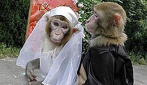 Imagenes Graciosas de Animales, Monos