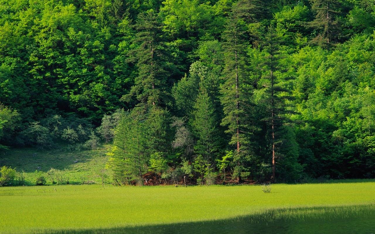 Леса планеты земля