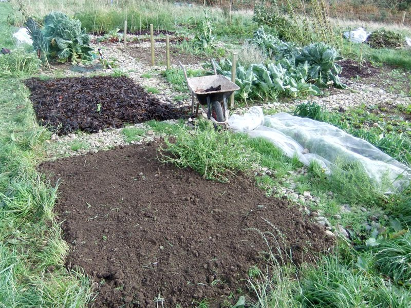 My allotment opportunities garden living and making with for What is rich soil called