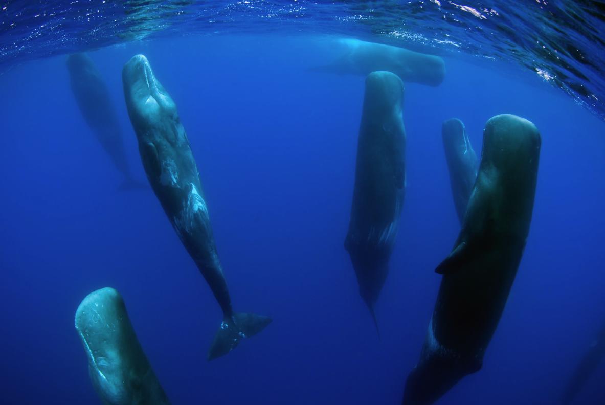 VIDEO: Víte, jak spí velryby?