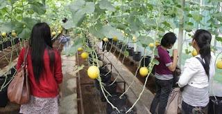 Fruits Mekar sari