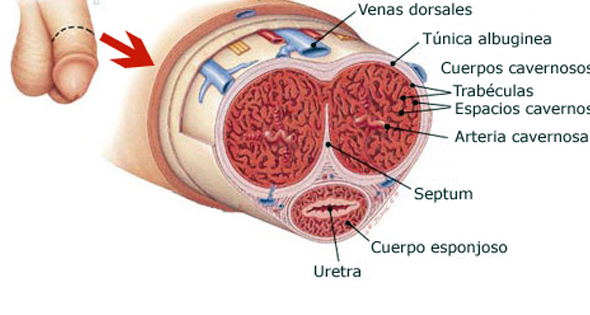 Does Viagra Increase Sensitivity Of Penis