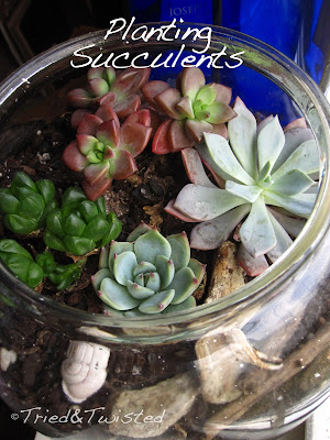 Planting Succulents via Tried & Twisted