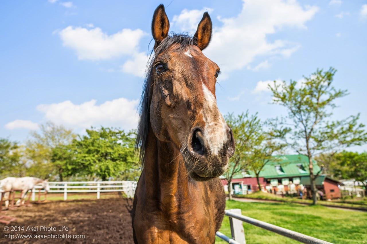 マザー牧場 馬の写真