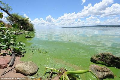 Tasik bertukar hijau