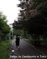 自転車道というより遊歩道
