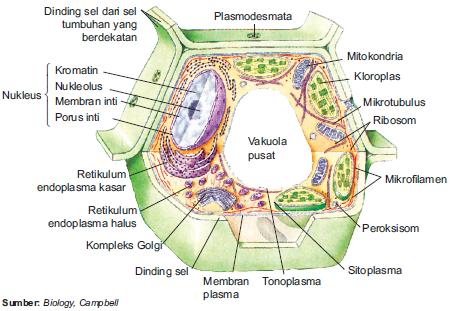 Struktur sel eukariotik pada tumbuhan