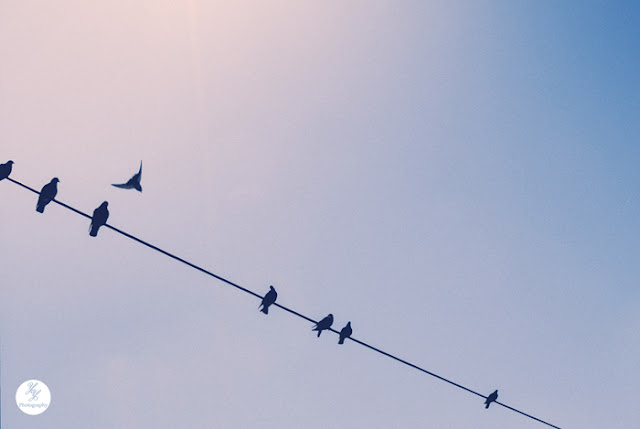 Birds On a Wire - Y&Y Photography