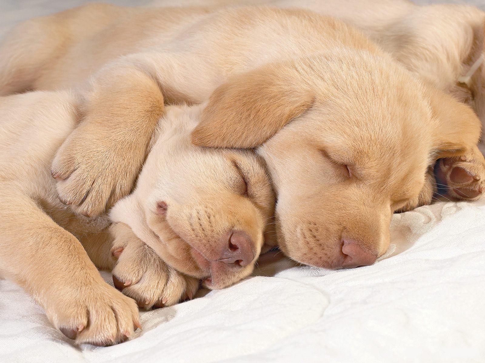http://4.bp.blogspot.com/-pcrX9FUbrxU/T-Bhb-eCvCI/AAAAAAAADL4/U7m7u48kE3M/s1600/Cute-puppies-in-hug-puppies-14748941-1600-1200.jpg