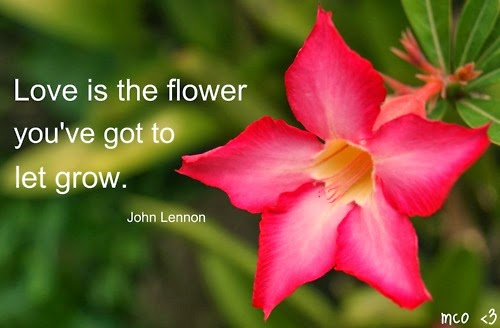 Flower Quotes Image For All Lover Arts And Entertainment Extraordinary Flower Love Quotes