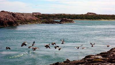 Puerto Deseado - las aves marinas