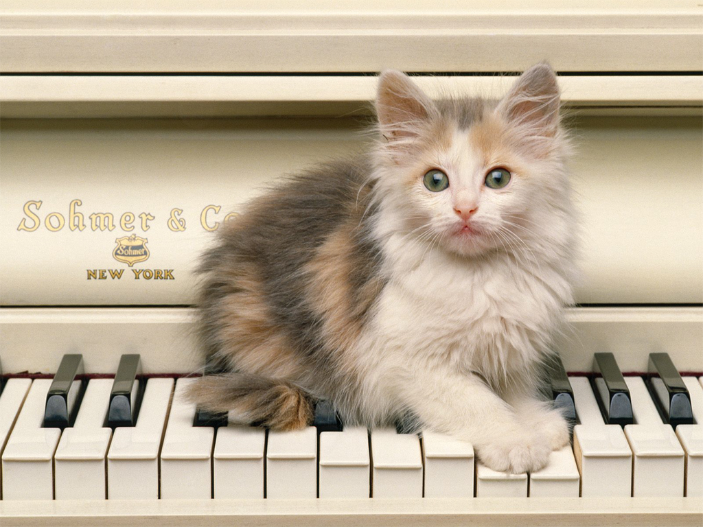 http://4.bp.blogspot.com/-pd7aF15sEGo/T8gxgfPJ0uI/AAAAAAAAA2Q/yehDTSC56mA/s1600/Cute-Cat-Play-Piano-Wallpaper.jpg