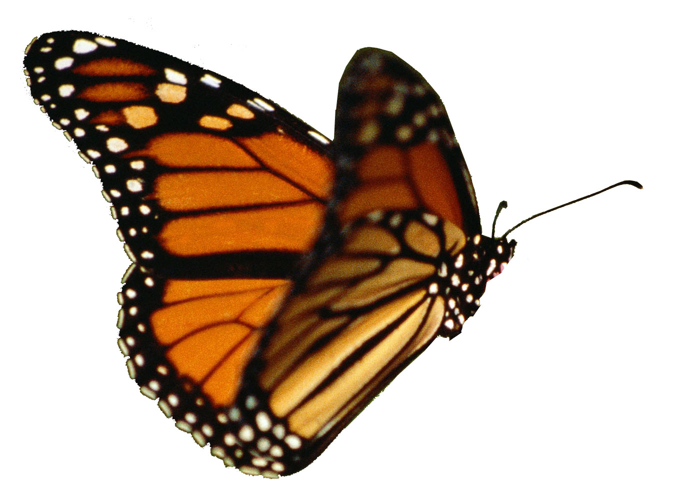 fly fly little butterfly How about a tiny poetry contest for this little guy leave a  the author of our  favorite tiny butterfly poem will win  fly away little butterfly.