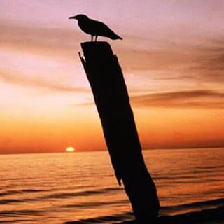 burung cantik ilustrasi kata bijak