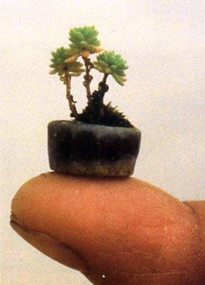 Вам приходилось когда-нибудь держать в руках дерево.  Нет, не черенок лопаты и не карандаш, а дерево настоящее...