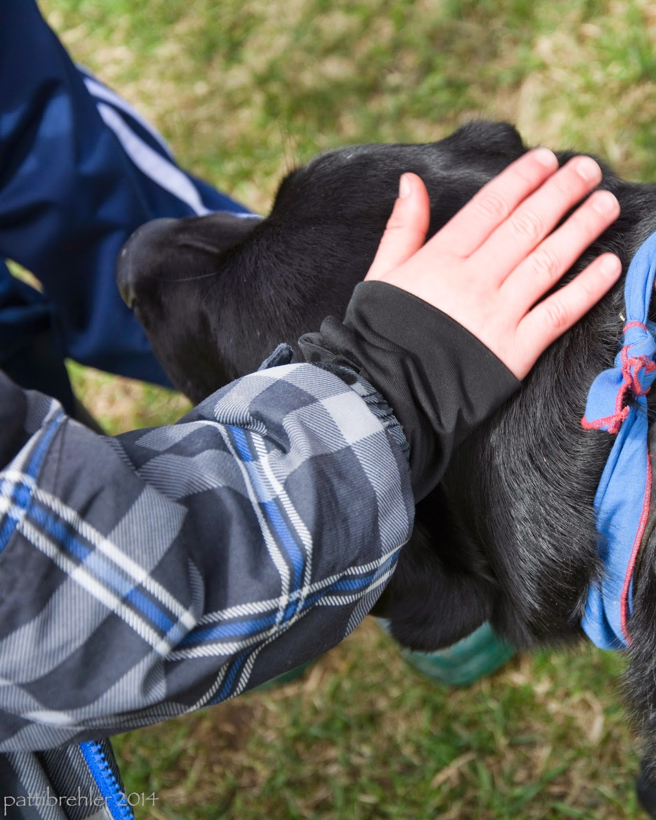 A child's hand pets the head of a black lab. The child is wearing a blue and grey plaid jackent. The arm of another chold is just visible in the background, wearing a navy blue with a white strip jacket.