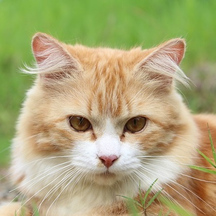 Q176 100匹の猫