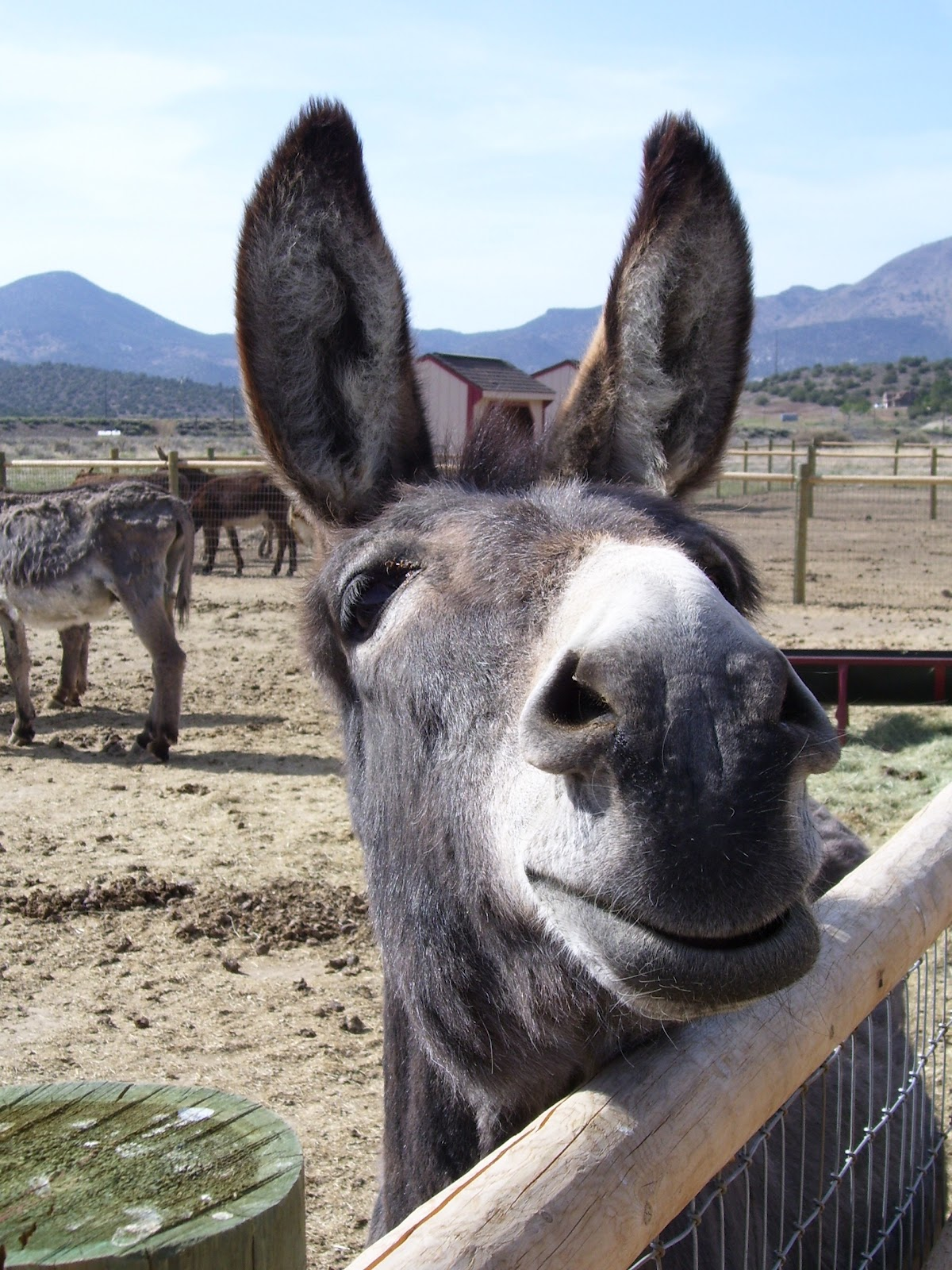 funny donkey faces - photo #28
