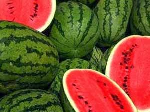 Teknis Budidaya Semangka dengan Produk Pupuk Organik NASA | Agro Nusantara. Budidaya semangka pdf, budidaya semangka kuning, cara budidaya semangka tanpa biji, budidaya semangka tanpa biji, budidaya semangka hidroponik, analisa budidaya semangka, cara budidaya semangka inul, budidaya semangka sistem turus, budidaya semangka, budidaya semangka dalam pot, budidaya semangka hibrida, budidaya semangka non biji, cara budidaya semangka non biji, budidaya semangka inul, budidaya tanaman semangka non biji. Panduan Cara budidaya tanaman Semangka varietas unggul organik kultur jaringan pupuk POC NASA HORMONIK SUPERNASA GRANULE POWER NUTRITION PENTANA BVR GLIO PESTONA TANGGUH DEKOMPOSER METILAT GREENSTAR AERO-810 | www.agrotaninusantara.com