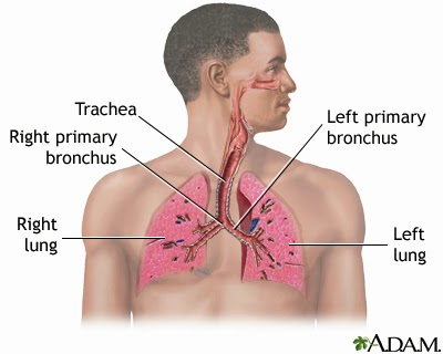 Remedies for Lung Problems - Astro Uncle