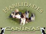 El blog de Pere Saavedra