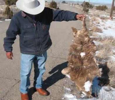 Navajo Skinwalker Sightings Navajo Legends Skinwal...
