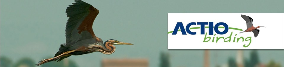 ACTIO BIRDING