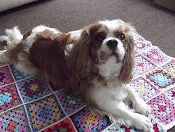 Archie's Blanket