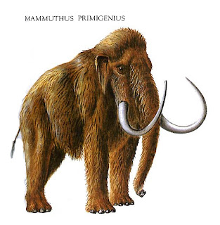 woolly-mammoth
