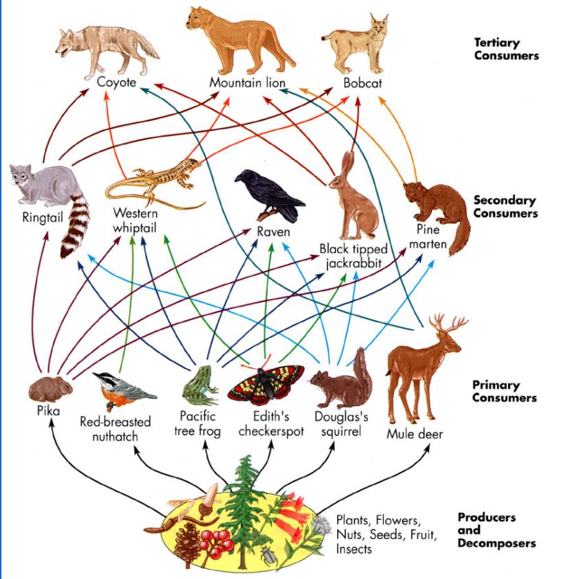 Pin Land Food Chain Of Animals on Pinterest