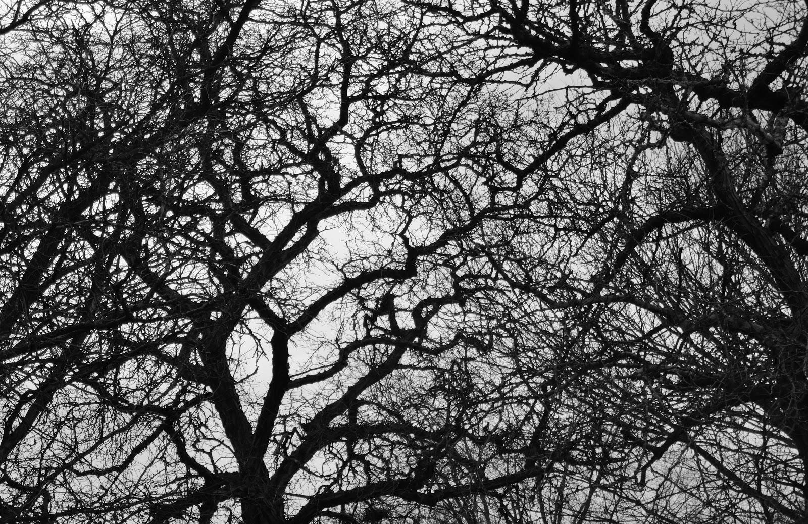 Roots essay