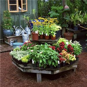 TARA JB'S: Home small potted gardens ideas.