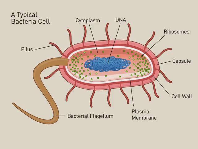 Mô phỏng cấu trúc điển hình của một vi khuẩn.