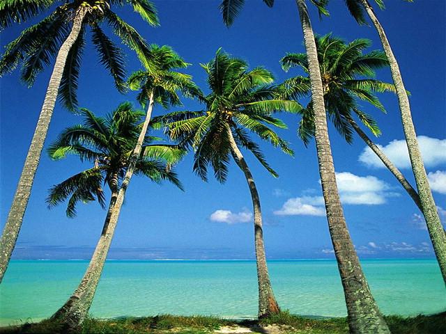 Free wallpapers nature scenes - Free palm tree screensavers ...
