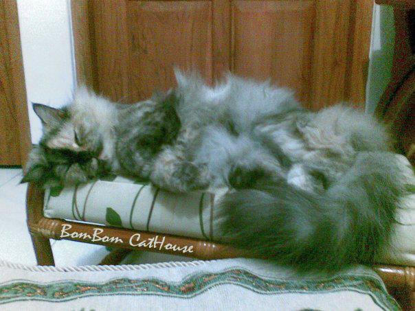 Bombom Cathouse Ciri Ciri Kucing Bunting