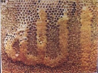 lafaz allah di sarang madu