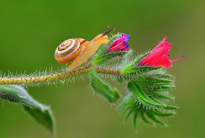 Un pequeño caracol sale de excursión - The Explorer