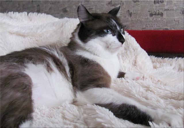 Кот Фунтик - кошак из кошаков