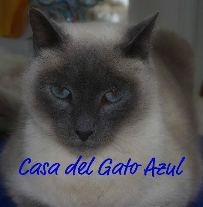 Casa del Gato Azul